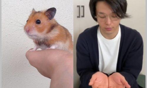 中村倫也のペット・ハムスター2匹の名前はしんのすけ&こんぶ!種類も調査!