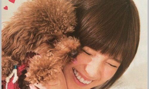 本田翼の愛犬2匹が可愛い!名前はボーとガブ!犬種や性格なども確認!